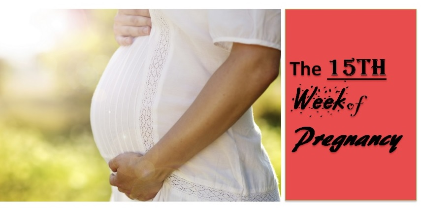 The 15th Week of Pregnancy