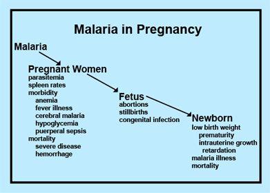 Is Malaria Dangerous During Pregnancy